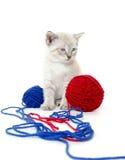 Cute kitten with yarn Stock Image
