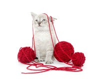 Cute kitten with yarn Stock Photos