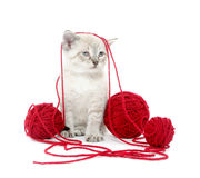 Cute kitten with yarn Stock Images