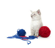 Cute kitten with yarn Royalty Free Stock Image