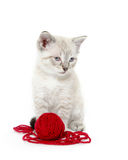 Cute kitten with yarn Royalty Free Stock Photography
