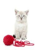 Cute kitten with yarn Stock Photography
