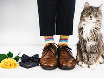 Cute kitten, rose and wedding rings. Cute kitten, yellow rose, wedding rings, bow tie, men`s legs in bright, striped socks and stylish brown shoes on a white Stock Images