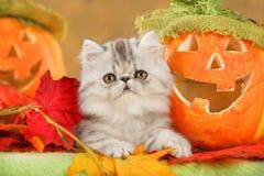 Cute kitten Stock Image