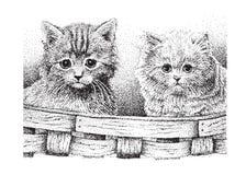 Cute Kittens Stock Image