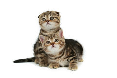 Cute kittens royalty free stock photos