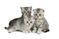 Cute kittens Stock Photos