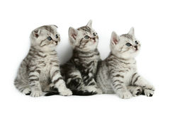 Cute kittens stock image