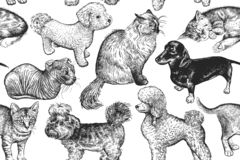Cute Kittens And Puppies. Seamless Pattern. Stock Images