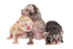 Cute kittens background. Cute new born kittens on white background royalty free stock photos