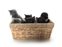 Cute kittens in a basket stock image