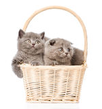 Cute kittens in basket looking away. isolated on white background.  stock photos