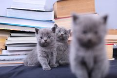 Cute kittens and books Stock Image
