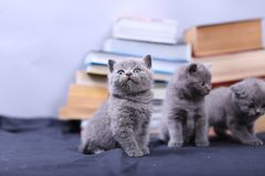 Cute kittens and books Stock Photo