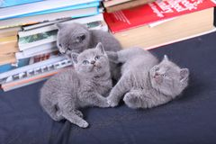 Cute kittens and books Royalty Free Stock Photos