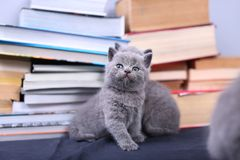 Cute kittens and books Stock Photography