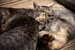 Kittens and cats sleeping together stock images