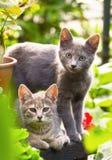 Cute kittens in garden stock photography