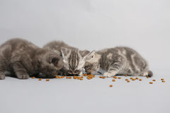 Cute kittens hungry Stock Photo