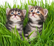 Cute kittens Royalty Free Stock Photo