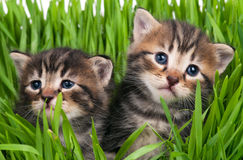 Cute kittens Royalty Free Stock Images