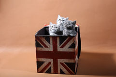 Cute kittens looking above Royalty Free Stock Images