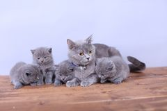 Cats family on a wooden background Royalty Free Stock Image