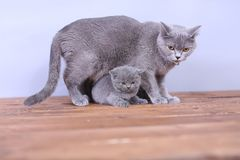 Cats family on a wooden background Royalty Free Stock Photography