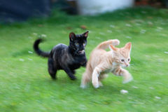 Cute kittens playing. Closeup of two cute kittens chasing each other outdoors royalty free stock photography