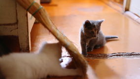 Cute  kittens playing indoor Stock Photos
