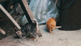 Cute Kittens Playing. Little homeless kittens red and gray colors are played with a cat on the street. Full HD 1920 x 1080p, 29,97 fps stock footage