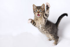 Cute Kittens playing on white background stock photo