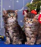 Cute kittens Royalty Free Stock Photo