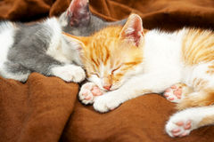 Cute kittens sleeping Stock Images