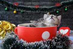 Cute kittens are sleeping among the New Year`s decorations Stock Photos