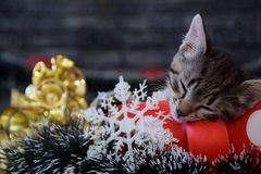 Cute kittens are sleeping among the New Year`s decorations Stock Photo