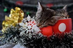 Cute kittens are sleeping among the New Year`s decorations Royalty Free Stock Photo