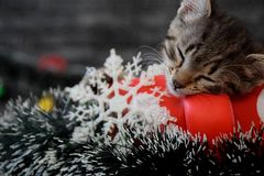 Cute kittens are sleeping among the New Year`s decorations Royalty Free Stock Photos