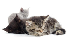Cute kittens sleeping. Three black, tabby and gray kittens laying down and sleeping on white background Royalty Free Stock Image