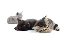 Cute kittens sleeping. Three black, tabby and gray kittens laying down and sleeping on white background Stock Image