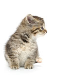 Cute kittens sleeping. Three black, tabby and gray kittens laying down and sleeping on white background Royalty Free Stock Photo