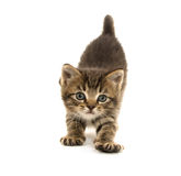 Cute kittens sleeping Royalty Free Stock Images