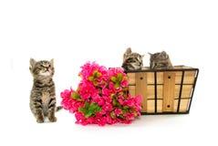 Cute kittens sleeping Royalty Free Stock Photography