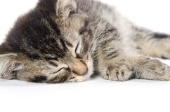 Cute kittens sleeping. Three black, tabby and gray kittens laying down and sleeping on white background Royalty Free Stock Photos