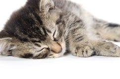 Cute kittens sleeping Royalty Free Stock Photos