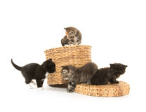 Cute kittens sleeping. Three black, tabby and gray kittens laying down and sleeping on white background Royalty Free Stock Images