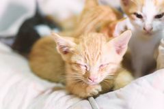 Cute kittens are sleeping together. Animal and pet at home Stock Photos