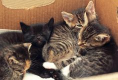 Cute kittens sleeping together in a cardboard box Stock Photography