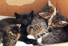 Cute kittens sleeping together in a cardboard box Stock Images