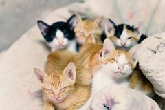 Cute kittens are sleeping together. Cute animal and pet in home Royalty Free Stock Photography